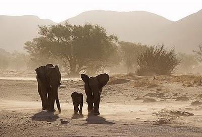 namibia-elefantes.jpg