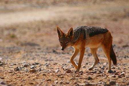 namibia-animales.jpg