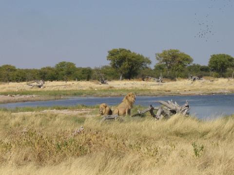 namibia-leones.jpg