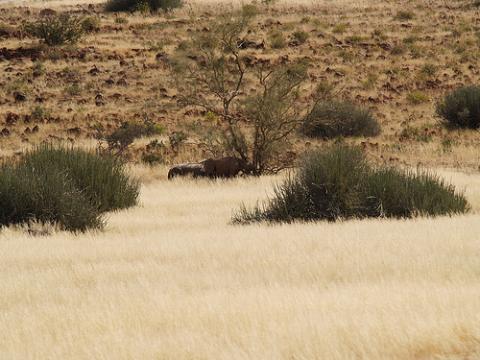 namibia-rinoceronte.jpg
