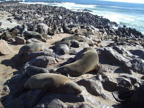 focas-namibia.jpg