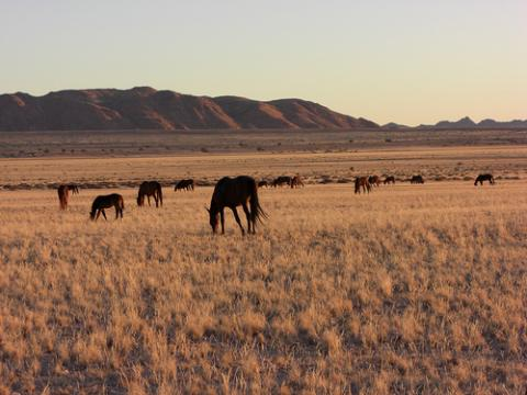 paisaje-namibia.jpg