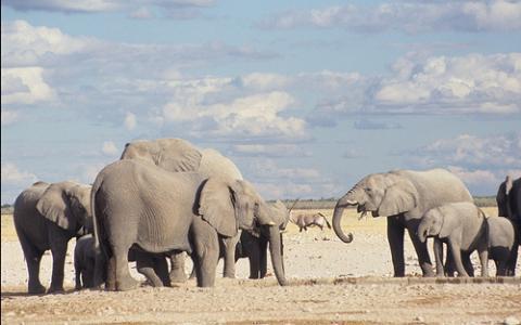 elefantes-namibia.jpg