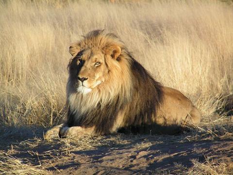 namibia-leon.jpg