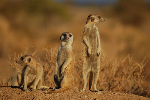 namibia-fauna.jpg