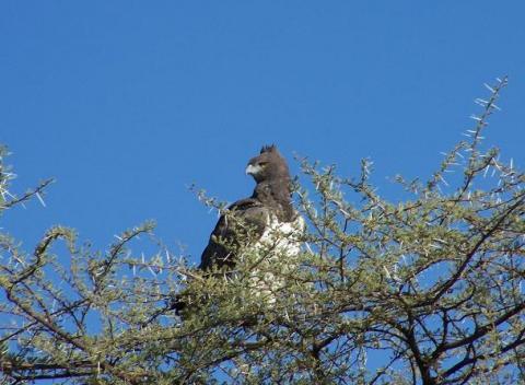 namibia-aguila.jpg